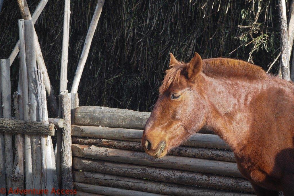 Wilderness-Weekend-Girl-Scouts-4-1024×683 Horses