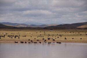 grasslands mountains