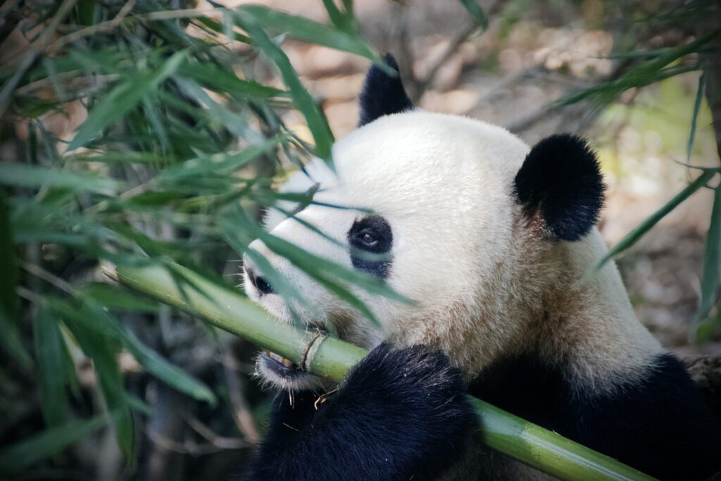 panda adventure access